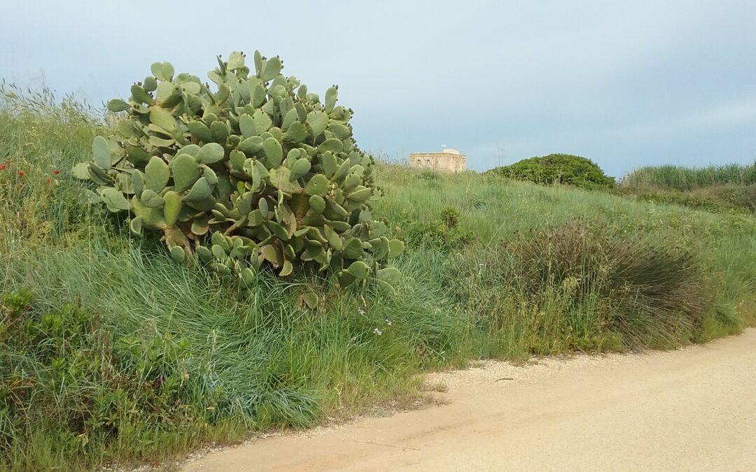 Visita guidata a Ostuni, rovine di Egnazia e Torre Guaceto